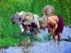 Tin Win Planting Rice Paddy